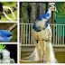 موسوعة  أجمل صور طيور برية نادرة بألوان رائعة