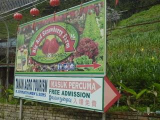 big+red+strawberry+farm.JPG