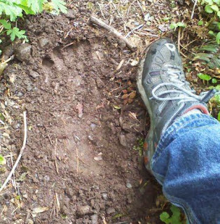 Bigfoot tracks found in WA