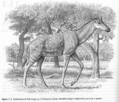 girafas extintas Palaeotragus