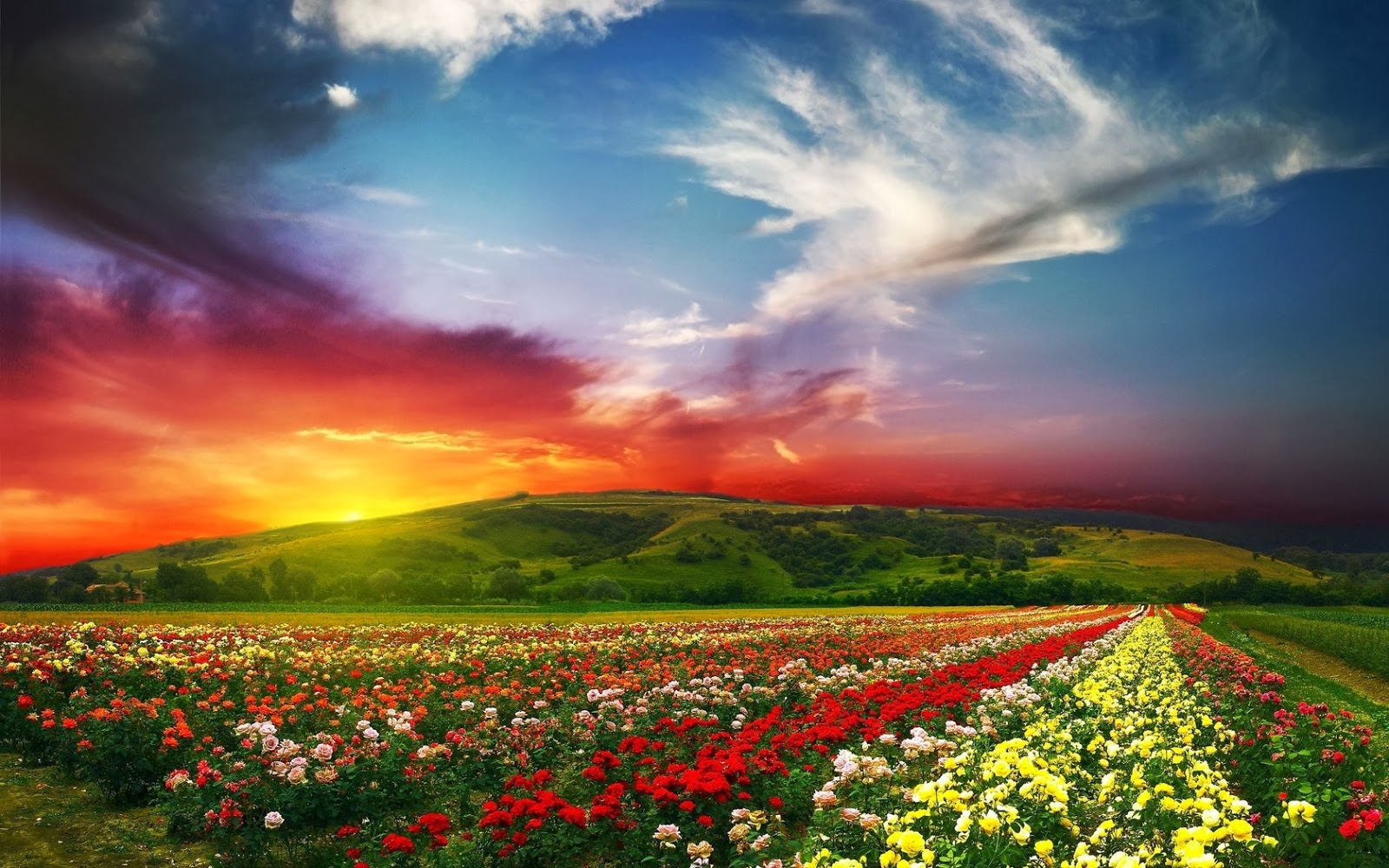 http://2.bp.blogspot.com/-SlE_F9PXVso/UrCBvMEsJGI/AAAAAAAAUIo/PozZQuAUW_U/s1600/paisaje-naturaleza-flores-bellas.jpg
