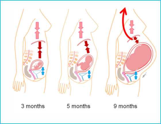 Болтнева мария беременна фото