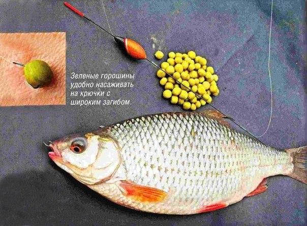какая наживка для речной рыбы