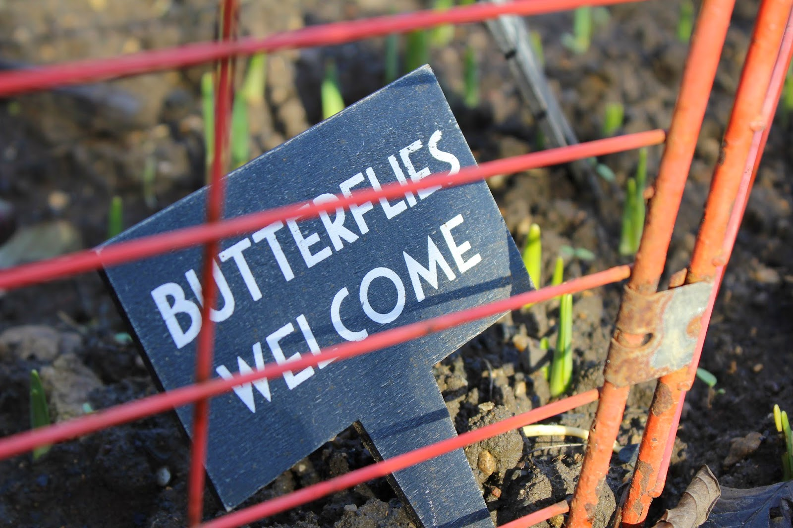 Butterflies welcome - The back garden // 76sunflowers