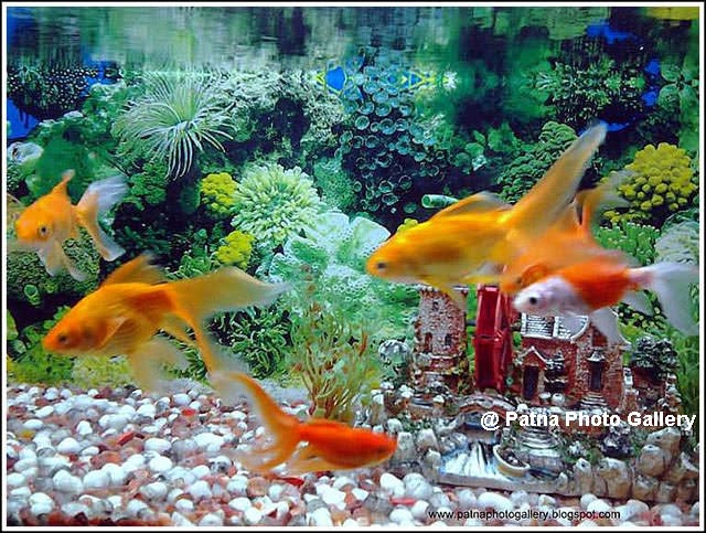 Patna Zoo fishes