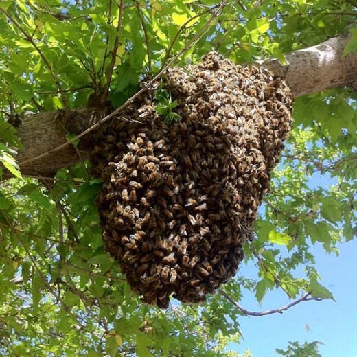 Typical swarm