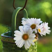 Trouxe um Balde de Flores para Você!