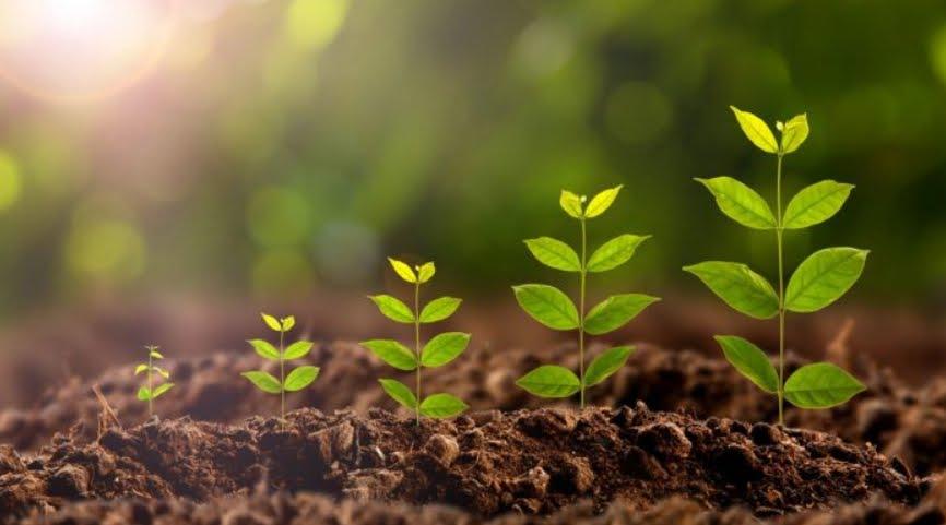 Quanti alberi sono necessari piantare per combattere i cambiamenti climatici.