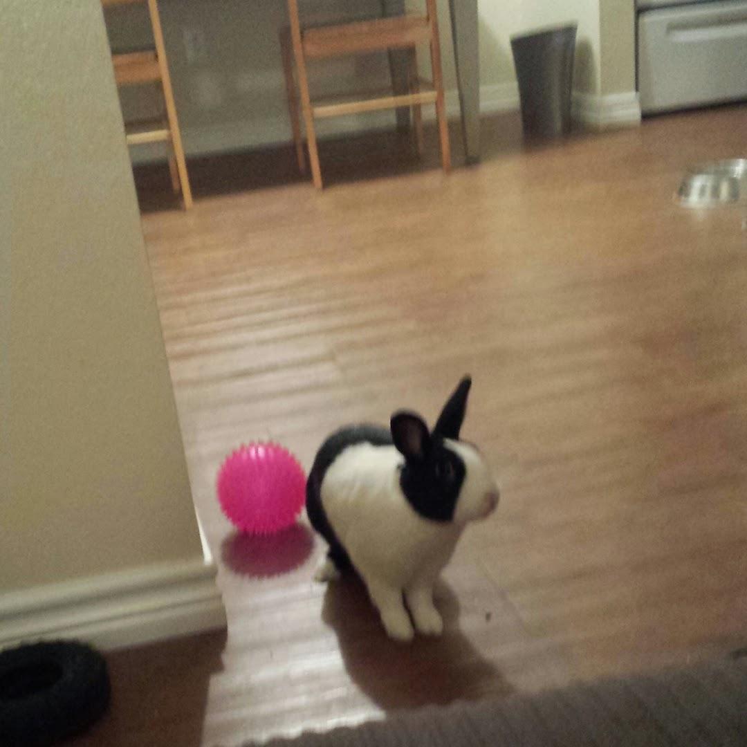 Dunkin the Bunny