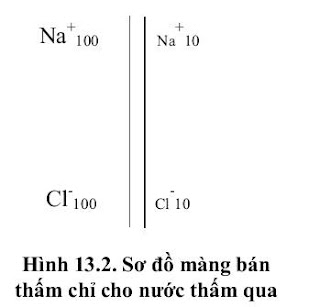 sự chênh lêch nông độ ion