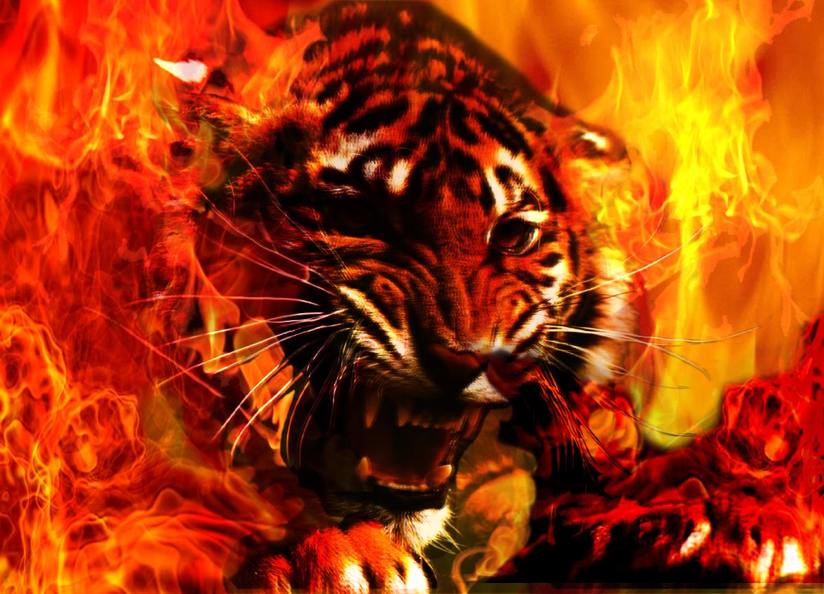 Fantastic Wallpaper Music Fire - 1firetiger  You Should Have_94241.jpg