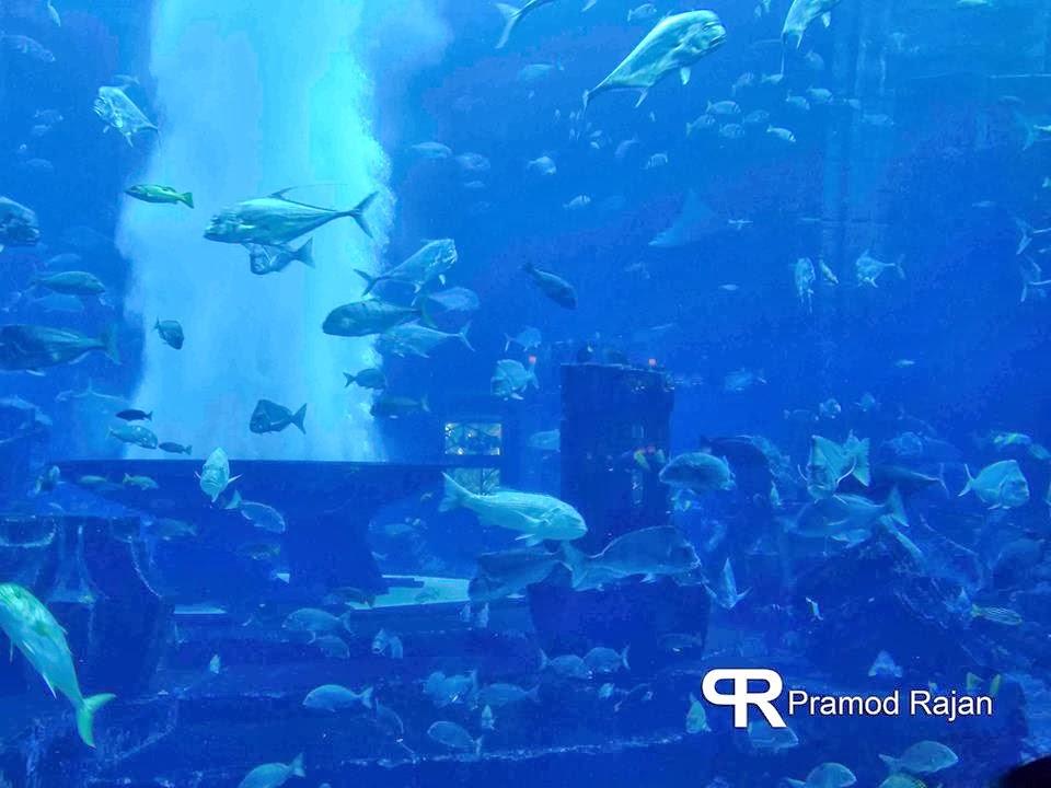 The Lost Chambers Aquarium Atlantis The Palm Jumeirah
