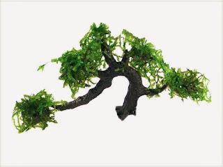 gambar-kayu-Christmas-Moss-Vesicularia-Montagnei-tanaman-moss-tanaman-aquascape