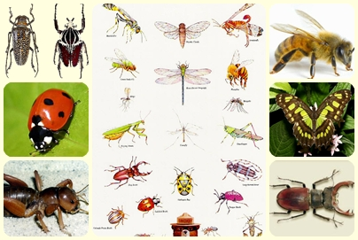 TECNOINGLISH -Technologies- TPR: Project: NEED and IDEA. Insects