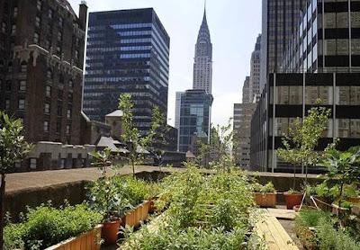 http://environment.nationalgeographic.com/environment/photos/urban-farming/#/earth-day-urban-farming-new-york-rooftop_51631_600x450.jpg