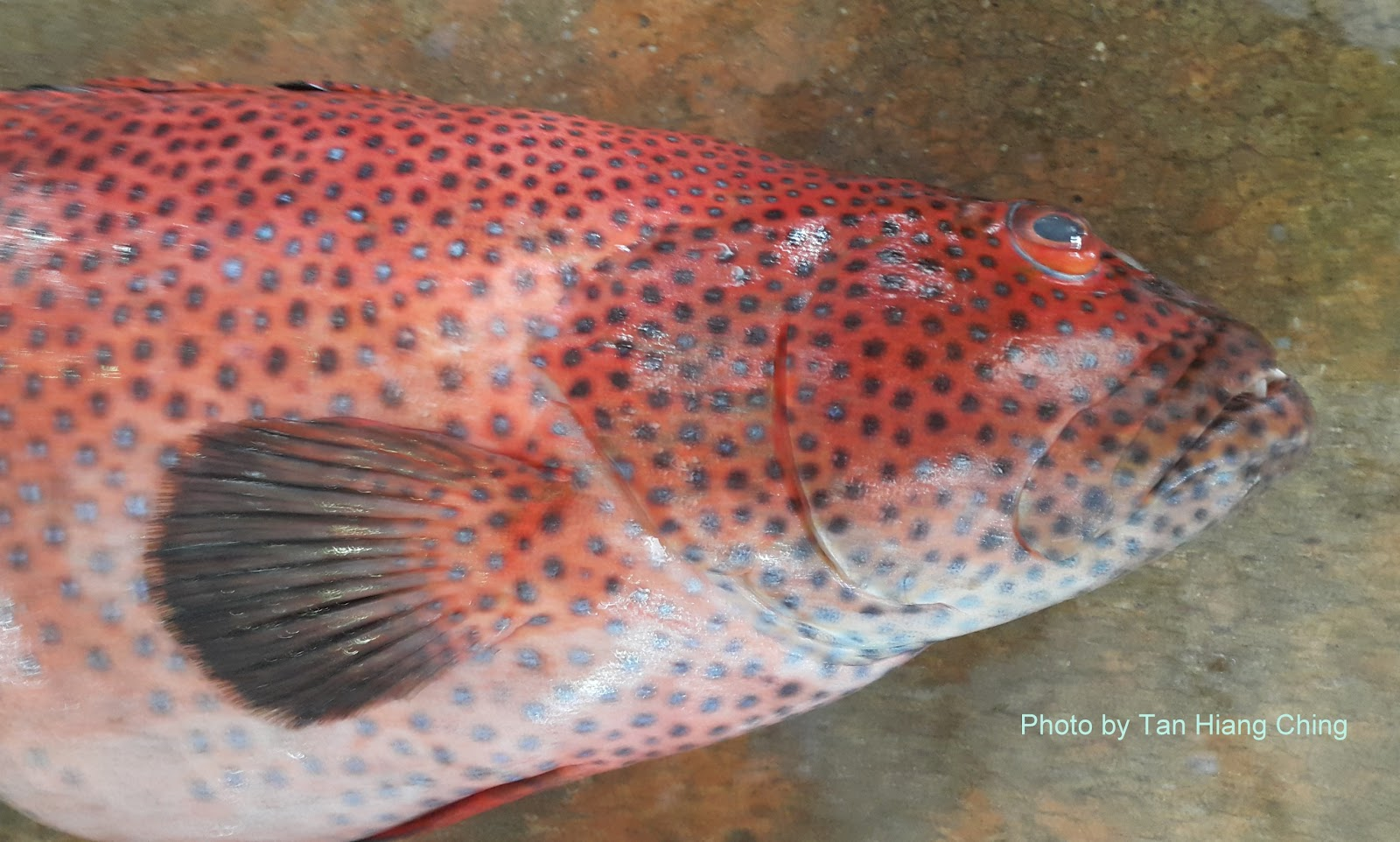 Groupers - Talk About Fish