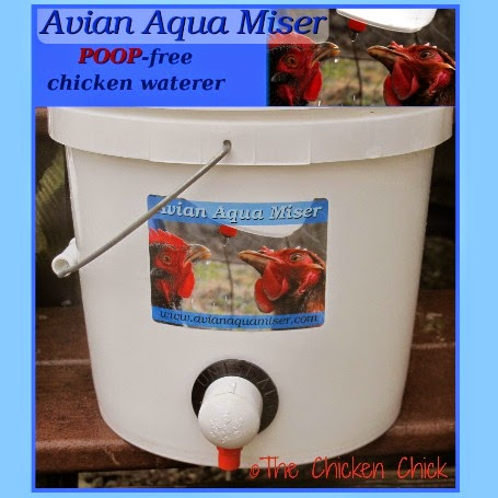 An Avian Aqua Miser 1.5 gallon EZ Miser Chicken Waterer!