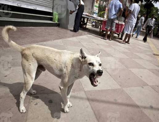 यदि कुत्ता काट ले तो क्या करें