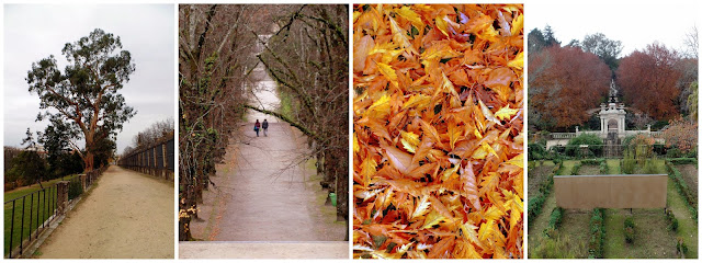 Coimbra Portugal Jardim jardin natureza naturaleza outono otoño