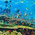 Ekosistem Laut Penting Dijaga Demi Ketahanan Pangan dan Wisata