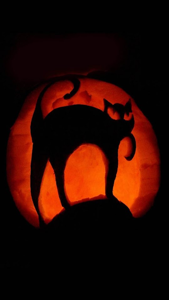 Black Cat Halloween Pumpkin Art  Galaxy Note HD Wallpaper