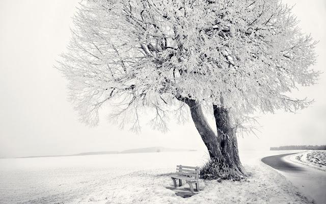 скамейка стоящая под деревом зимой