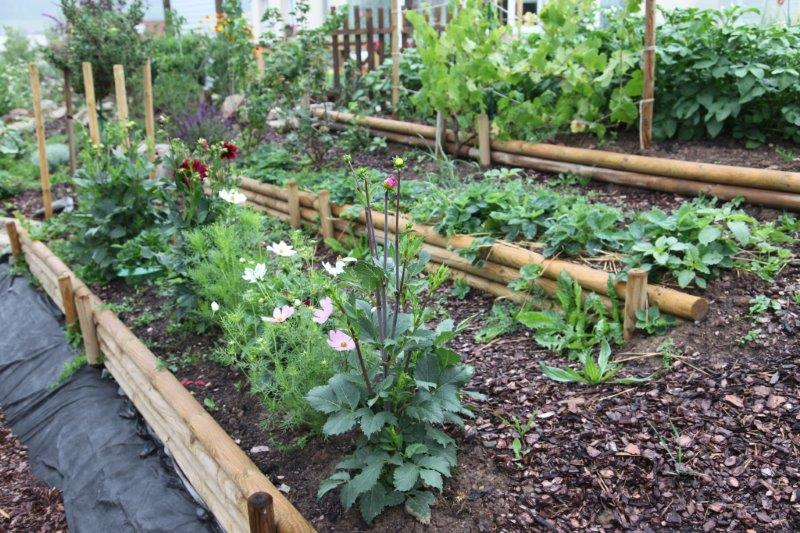 do mi s garten: 30 liter regen und ein intensiv grüner garten, Gartenarbeit ideen