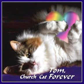 Tom, The Church Cat