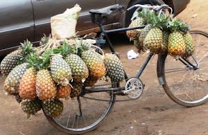Uganda pineapples