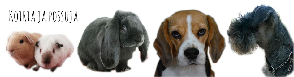 Koiria ja possuja