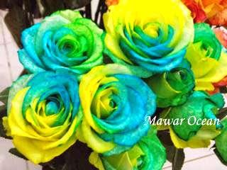 Bunga mawar ocean hadiah paling unik
