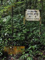 Jungle Trek 5, Cameron Highlands
