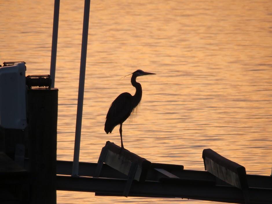 Blue Heron Cove