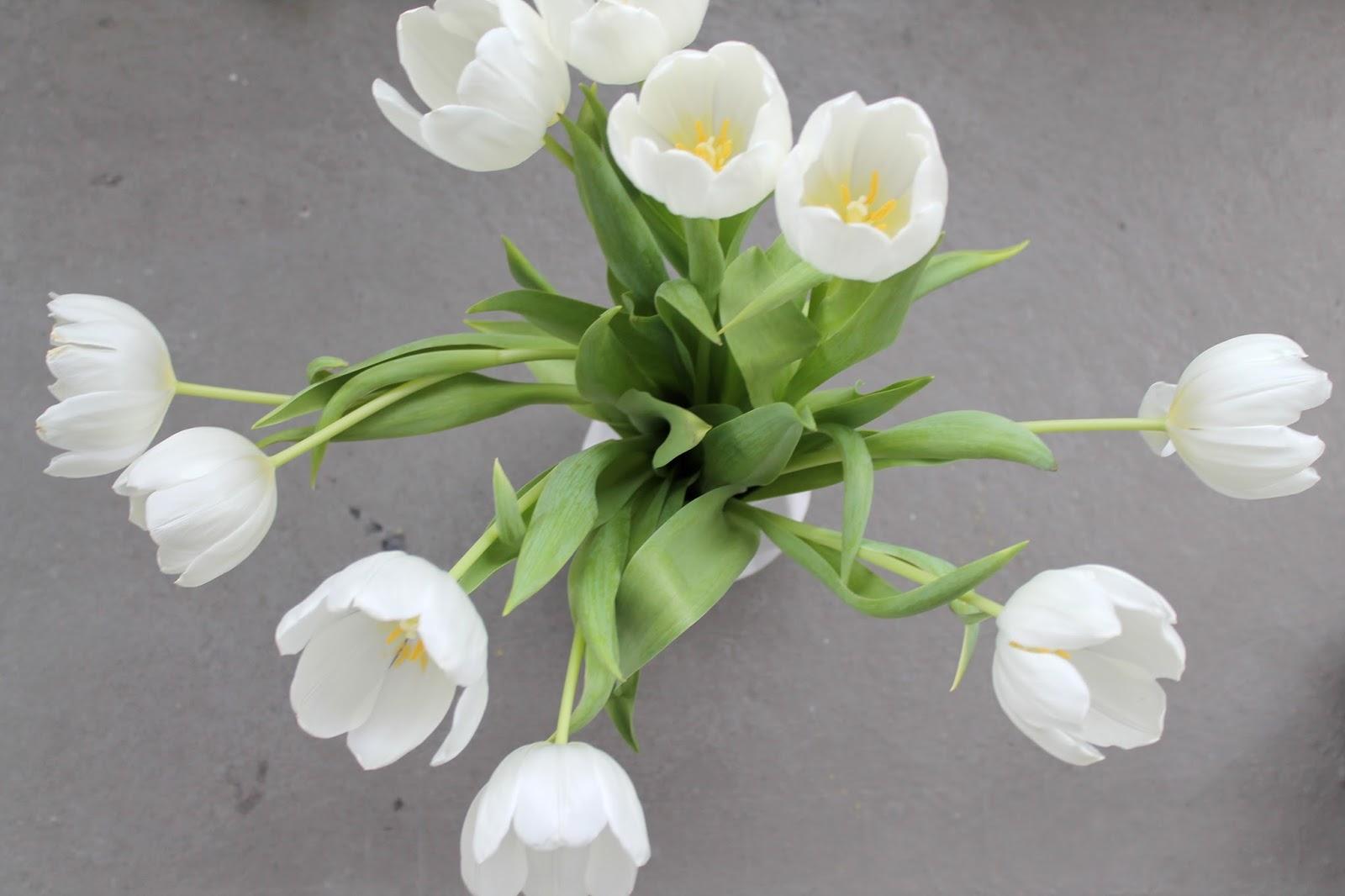 Strauss Weisse Tulpen Fruehlingsboten