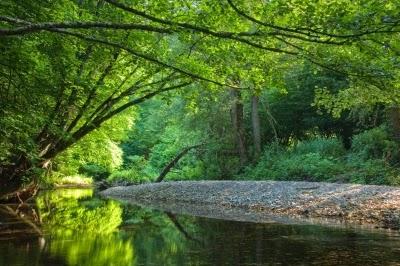 Tree by stream