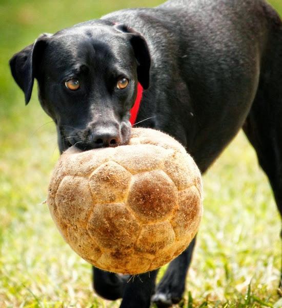 29. Soccer Dog