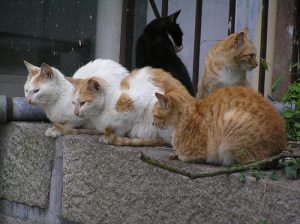 http://2.bp.blogspot.com/-Ss-ZP_XFAzg/TlCGU99aV2I/AAAAAAAAAPk/Nv1d-782MMM/s1600/cats-china.jpg