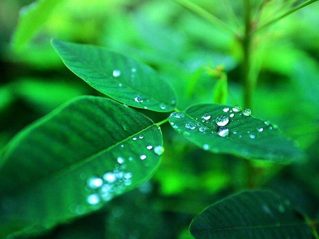 Beauty of world dew drops it had become one with the whole izmirmasajfo
