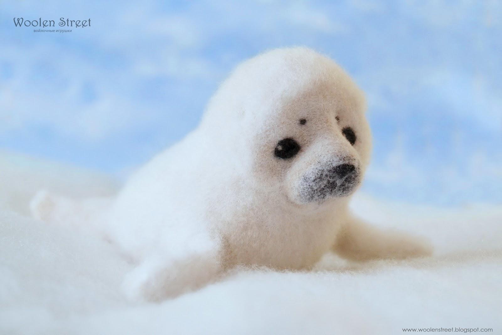 маленький тюленик фото