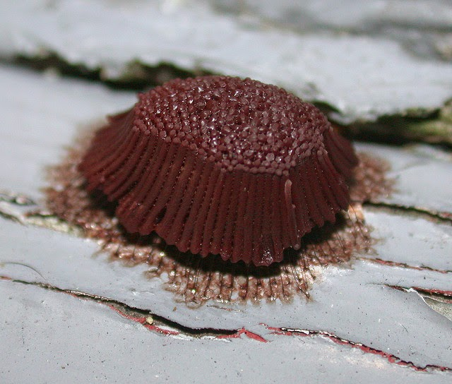 chocolate slim opinioni reali zeus.jpg