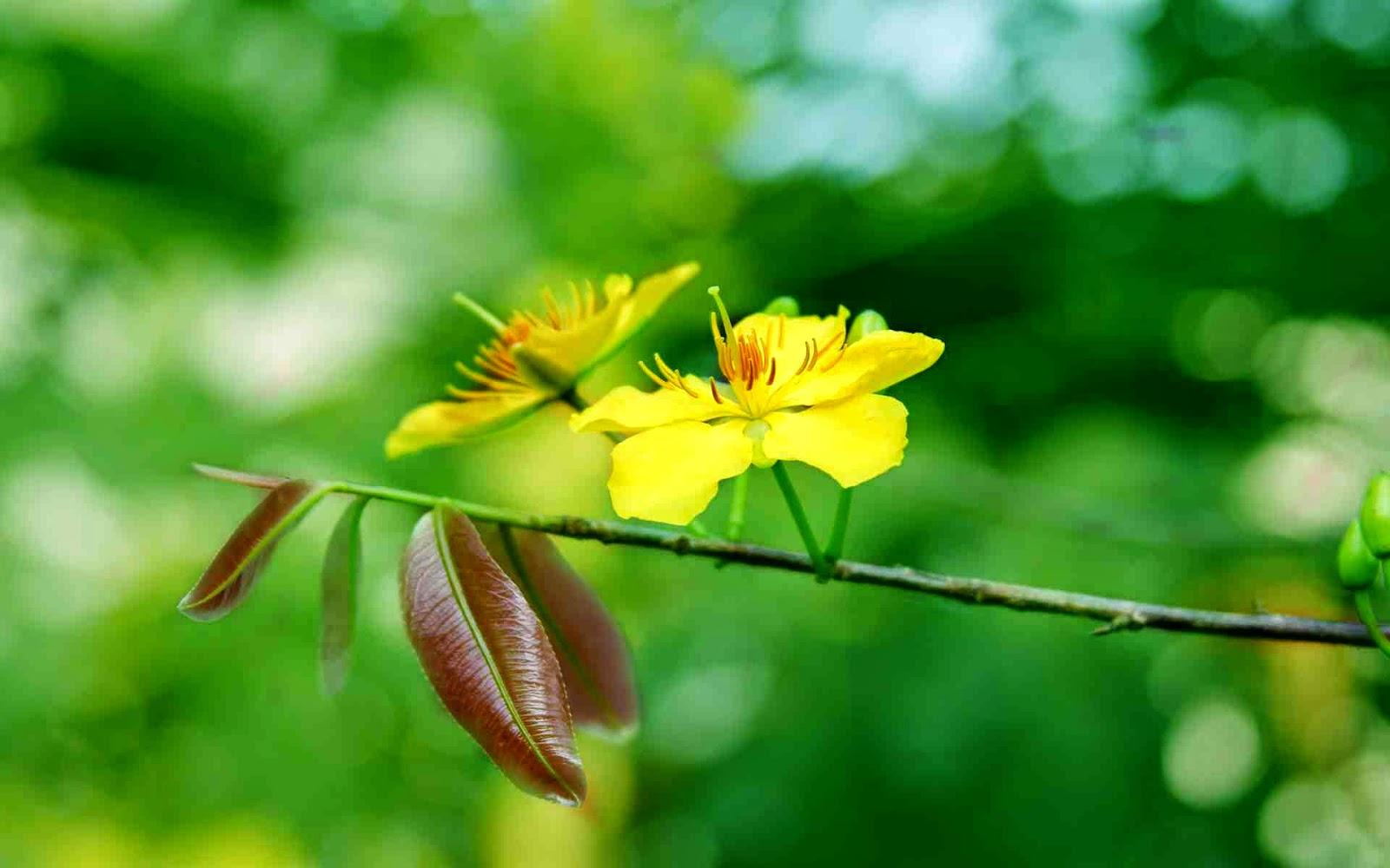 kho hình hoa mai đẹp