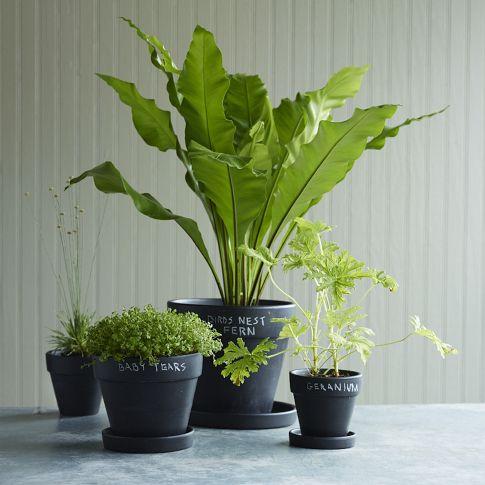 Pots, herbs
