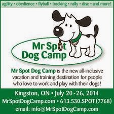 Mr. Spot Dog Camp