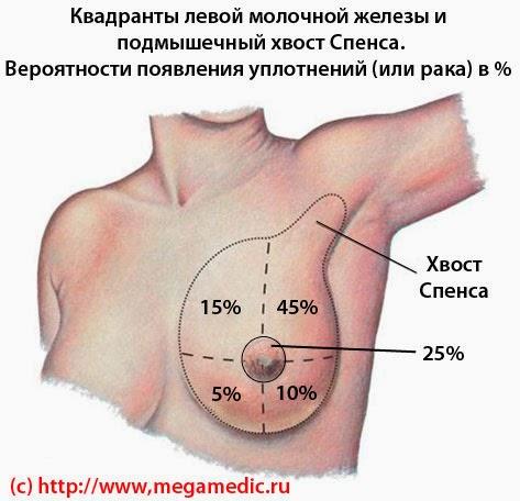 Квадранты молочной железы