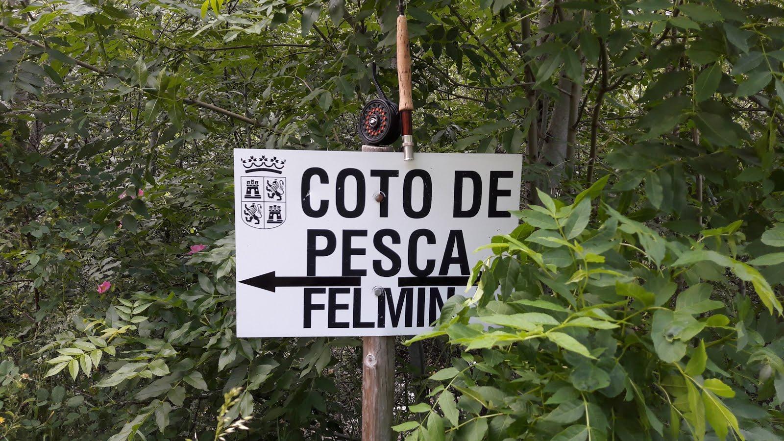 HISTORIA DE UN DÍA DE PESCA  EN EL COTO DE FELMÍN, RÍO TORÍO.