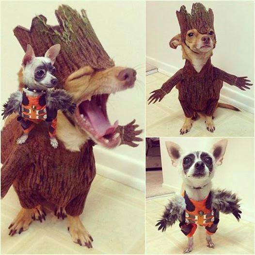 perros guardianes de la galaxia
