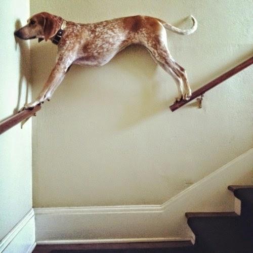 Not so smart dog