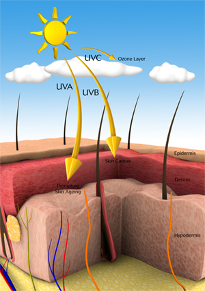 understanding the composition and function of the ozone layer Key points 1 what is the  composition, temperature, or function by composition, we have two layers,  where is the ozone layer and.
