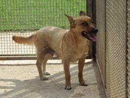 Lola,derivato volpino,tg piccola,7-8 kg