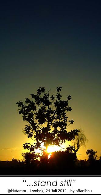 Siluet Pohon pada Sunset di Lombok